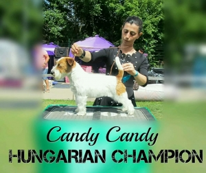CANDY CANDY HUNGARIAN CHAMPION
